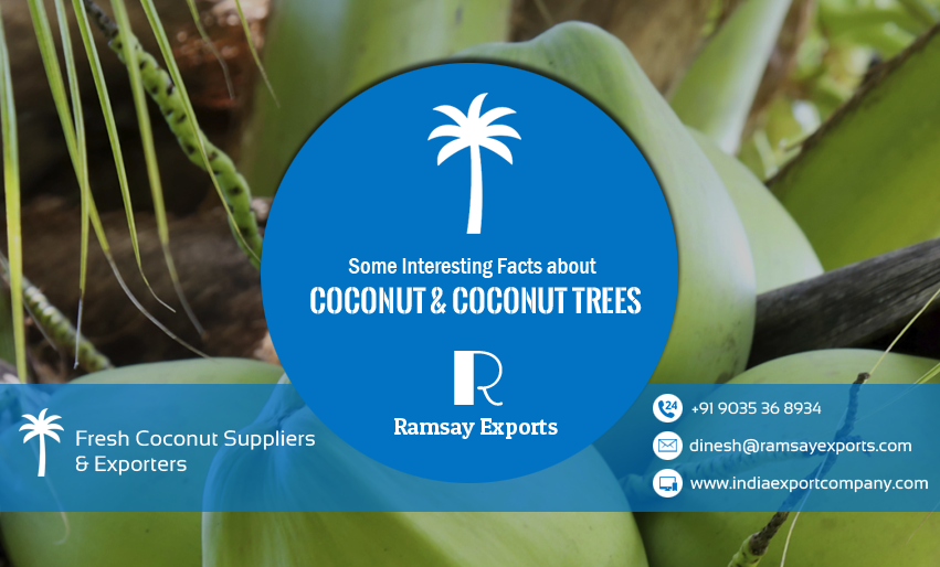 coconut facts from coconuts suppliers from tamilnadu, pollachi,salem