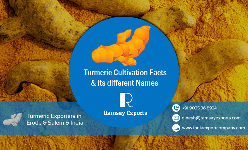 Turmeric Cultivation Facts from Turmeric exporters in India & Erode