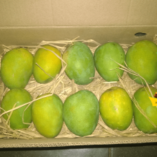 alphonso mango packing tamilnadu suppliers